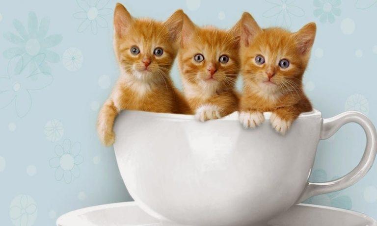 Cerita Artis Pecinta Kucing